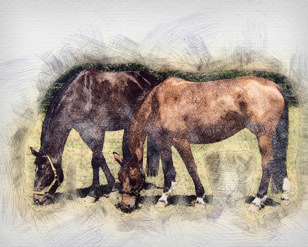 Pferd gezeichnet vom Foto