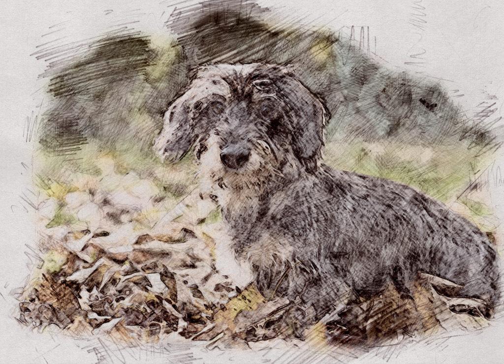 Zeichnung vom hund
