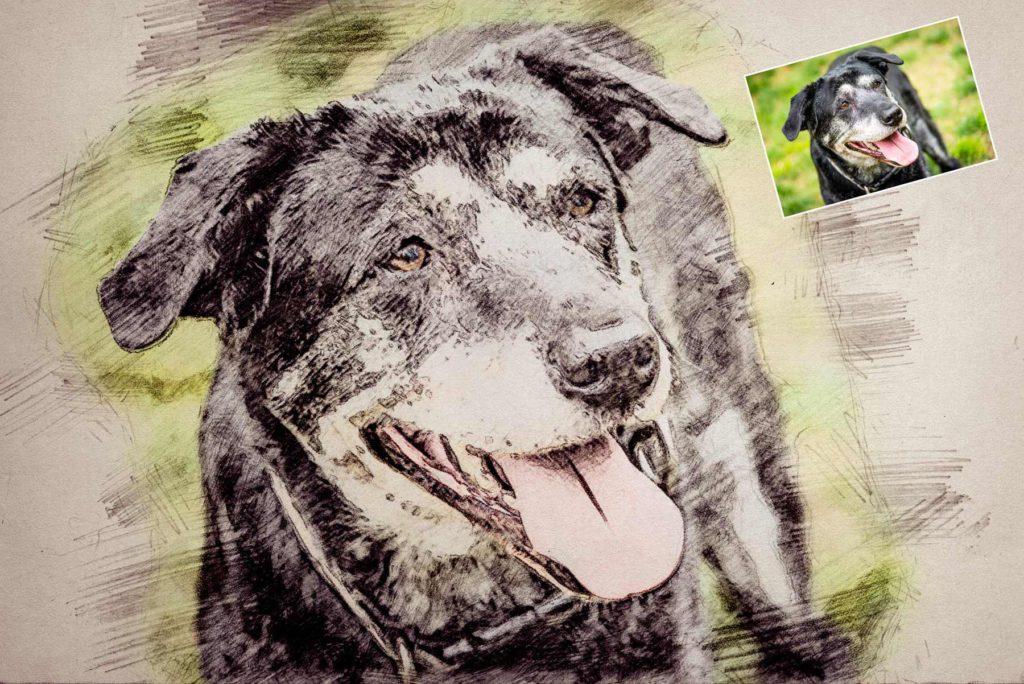 Zeichnung vom Haustier