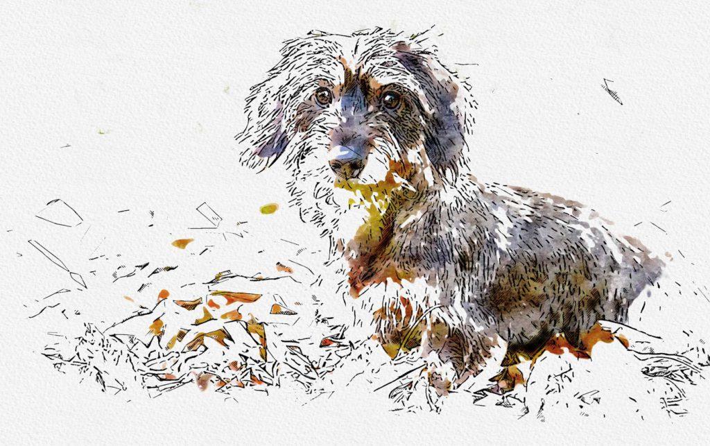 Aquarell Zeichnung vom Hund