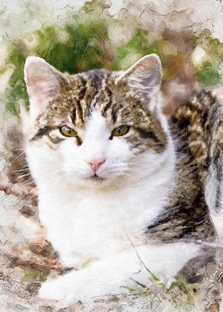Katzenportrait bestellen