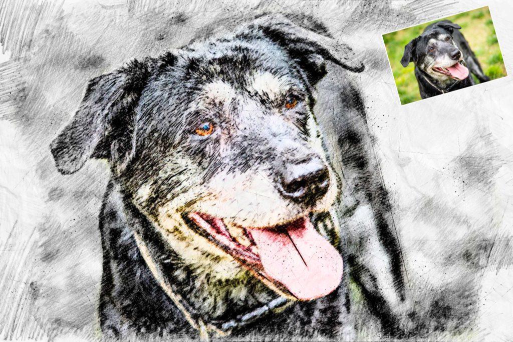 Tierportrait nach Foto: Bleistiftzeichnung Hund
