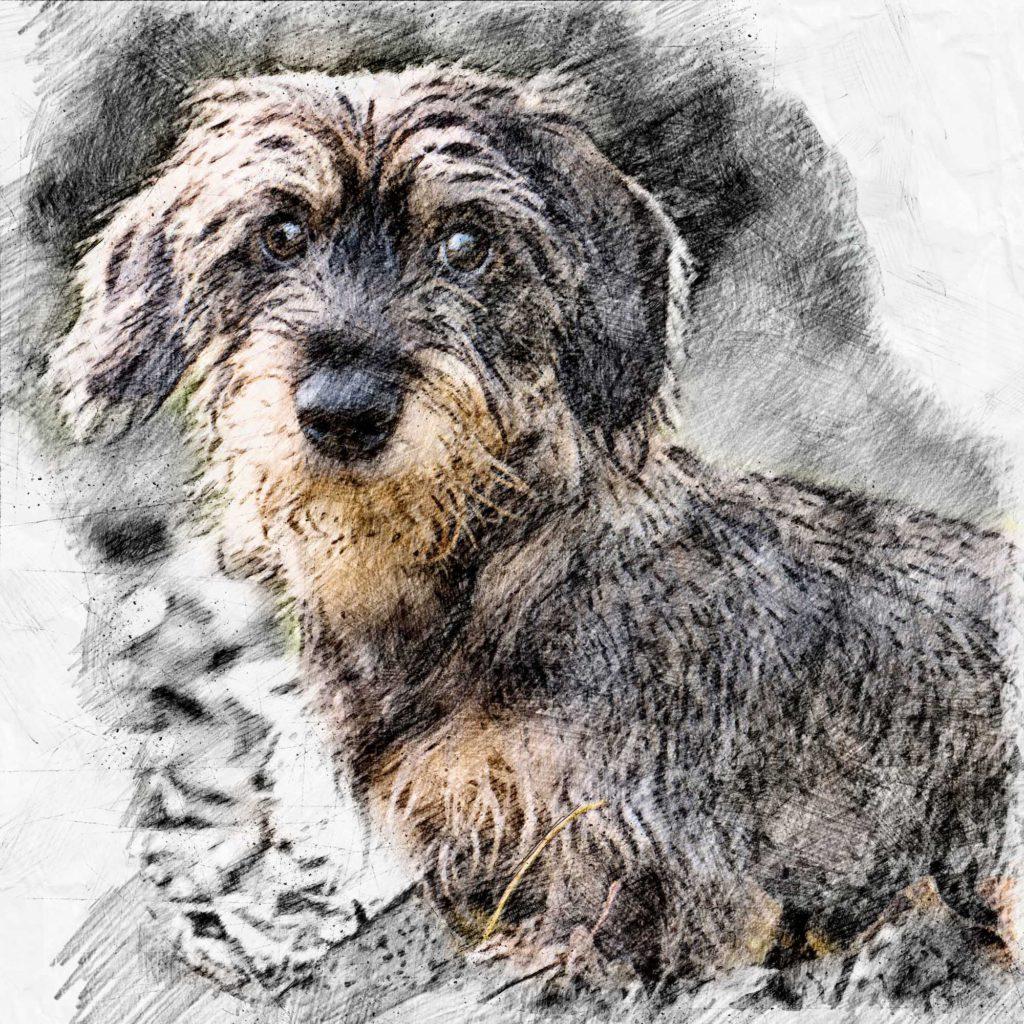 Hundezeichnung vom Foto
