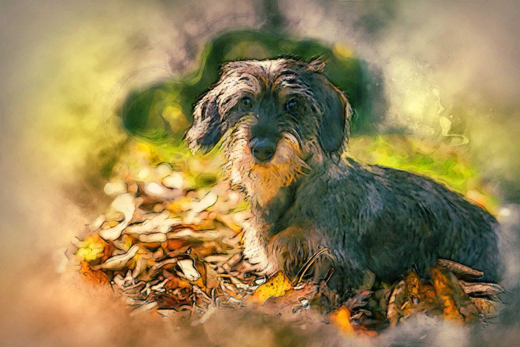 Bild vom Hund