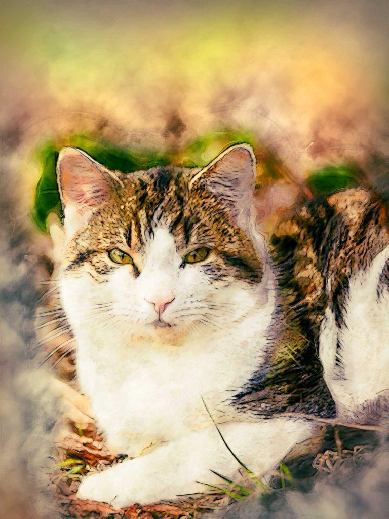 Gemälde Foto Katze