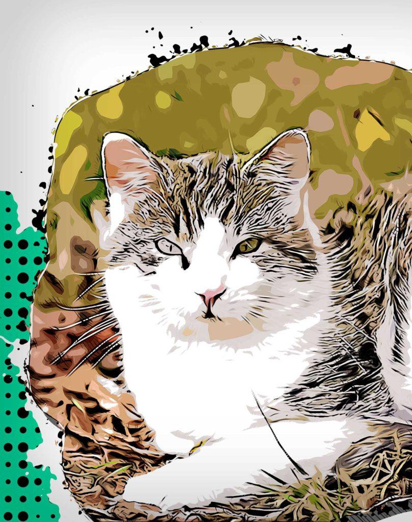 Poster Katze