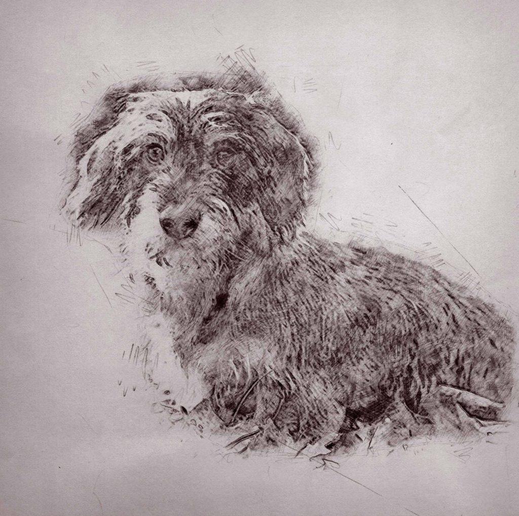 Bleistiftzeichnung Hund